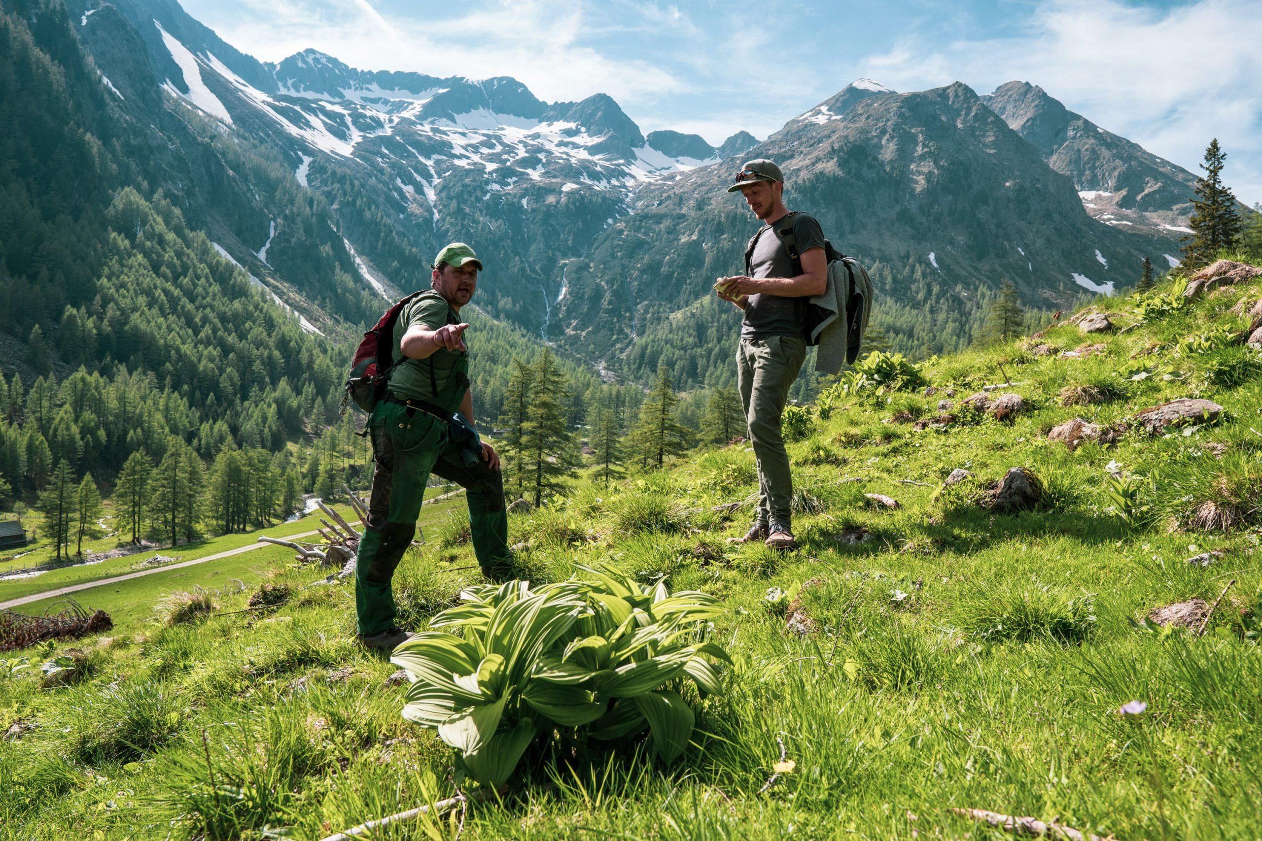 Bergbauer Christian Bachler erklärt Almpflanzen