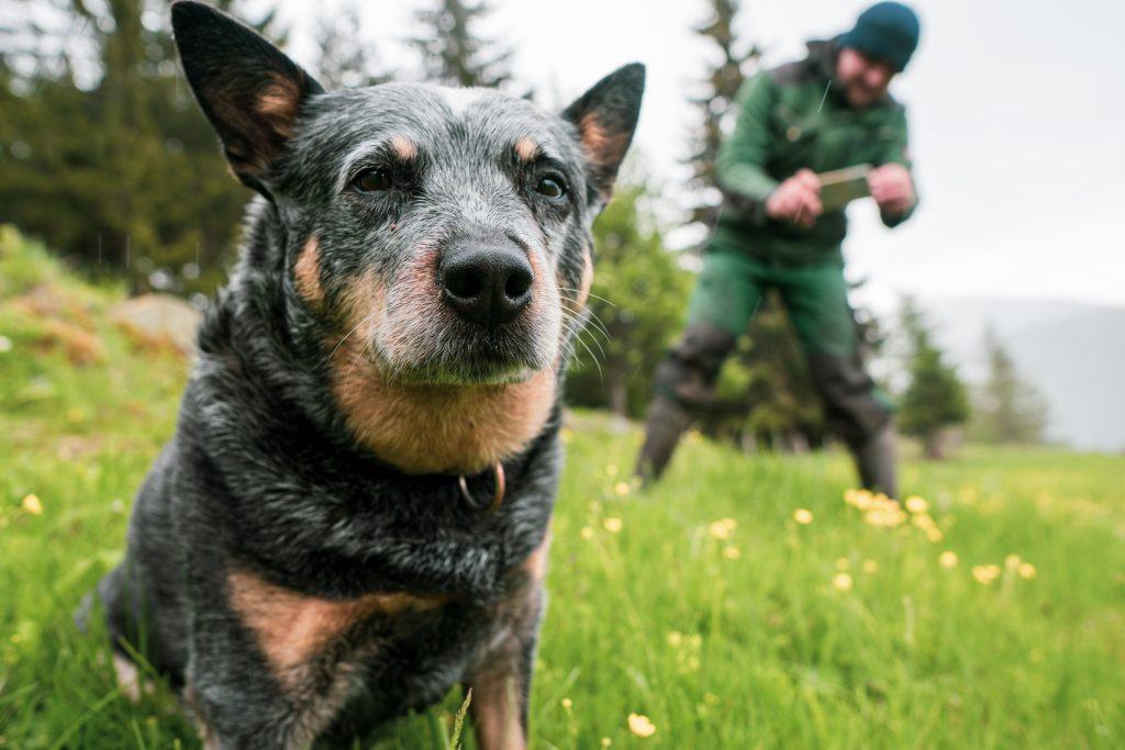 Hofhund Nessi, im Hintergrund Christian Bachler